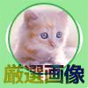 LINEのプロフィール画像に使える無料で可愛い厳選画像15選
